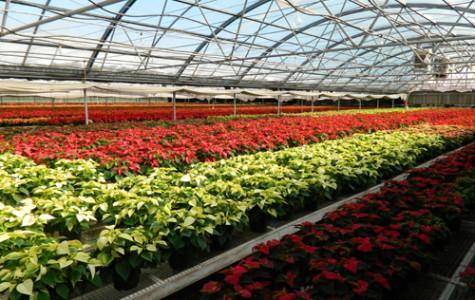 WTAMU students take tour of Erwin's Greenhouse