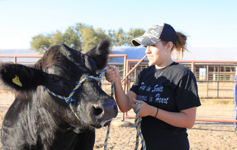 Students compete with livestock to learn skills