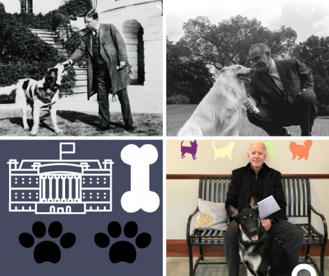 There have been a number of presidential dogs throughout the course of history.