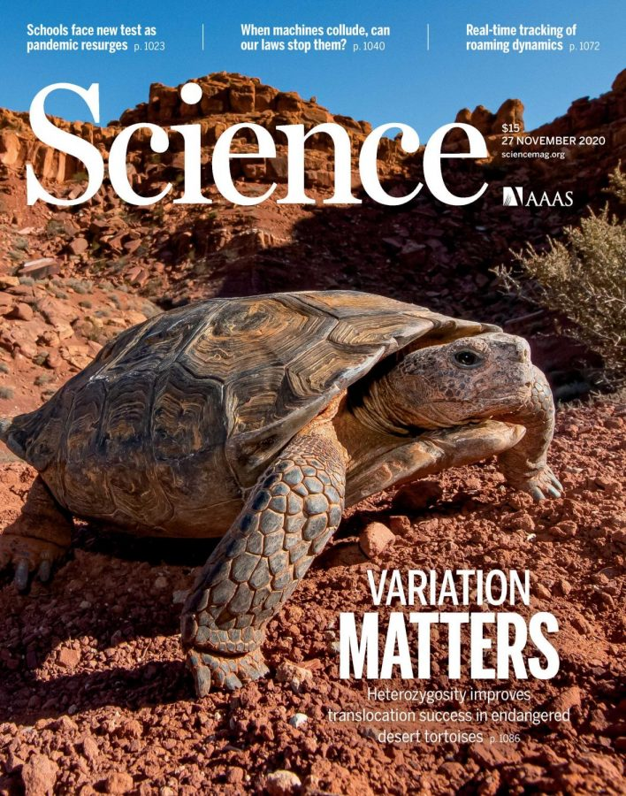 Dr.+Peter+Scott+along+with+other+co-authors+researched+the+translocation+an+genetics+of+the+Mojave+Desert+Tortoises.